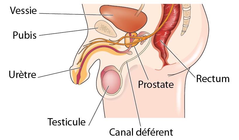 Masturbation prostate from anus